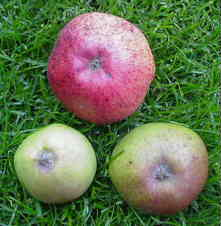 Three Cider Apples